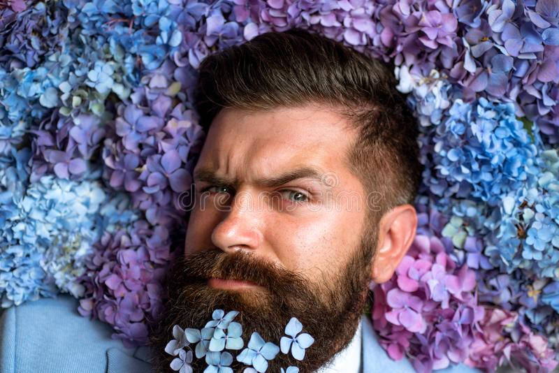 Male with hydrangea flowers. Bearded man. Summer. brutal caucasian hipster with moustache. spring. womens day. Mature royalty free stock image