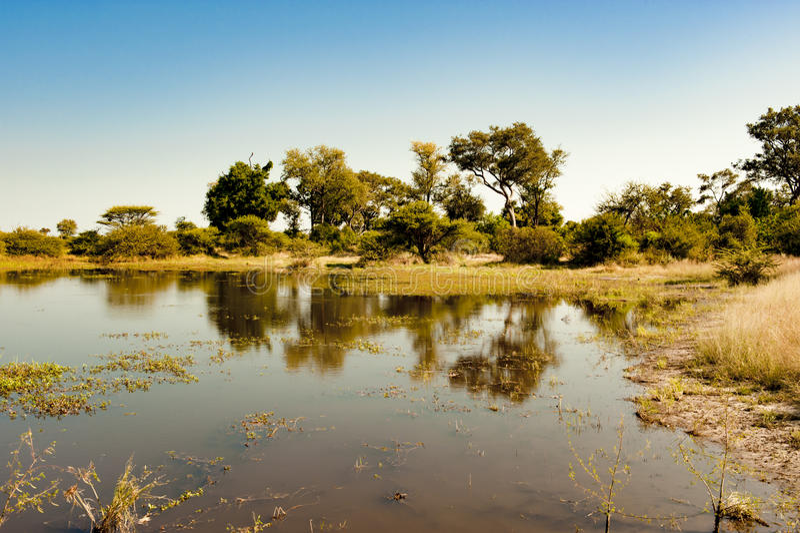 Beautiful landscape Okavango Delta royalty free stock photography