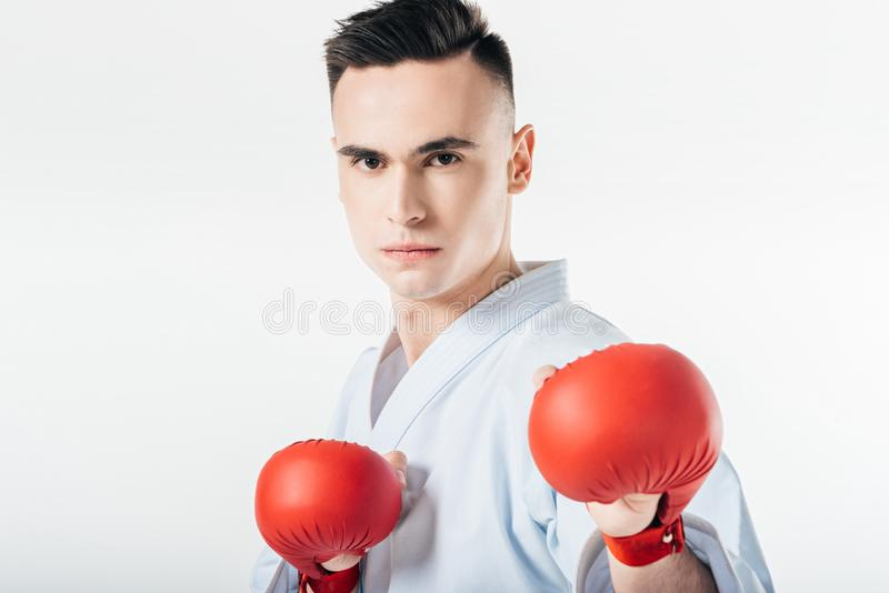 Male karate fighter with red gloves. Isolated on white stock photos