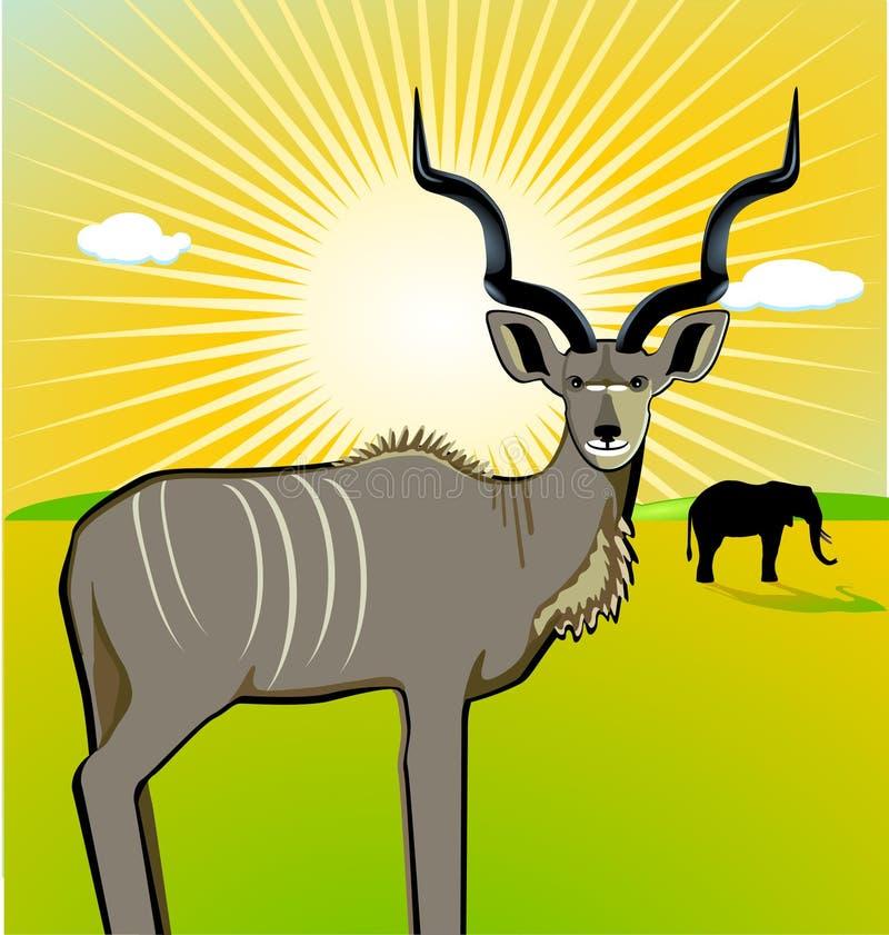 Download A Male Kudu Stock Photography - Image: 14751432
