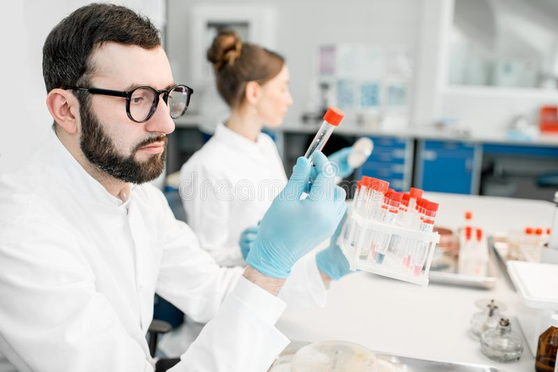 Laboratory assistants in the bacteriological department. Male laboratory assistant examining test tube in the bacteriological department of laboratory royalty free stock photos