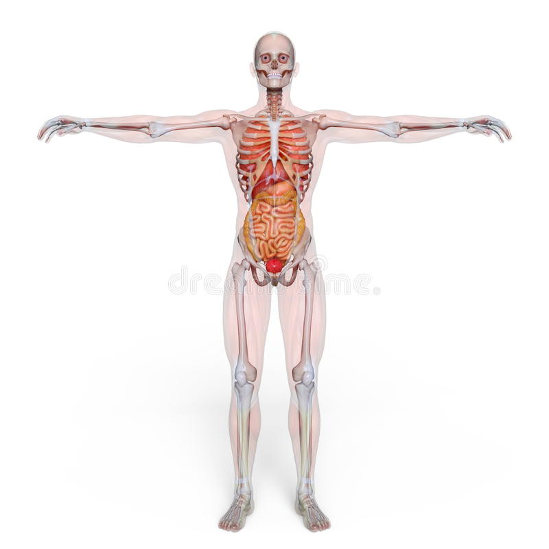 Male lay figure. 3D CG rendering of a male lay figure stock illustration