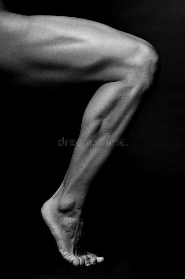 Male leg stock photo