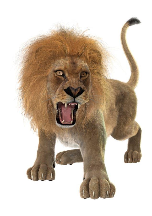 Male lion royaltyfri fotografi