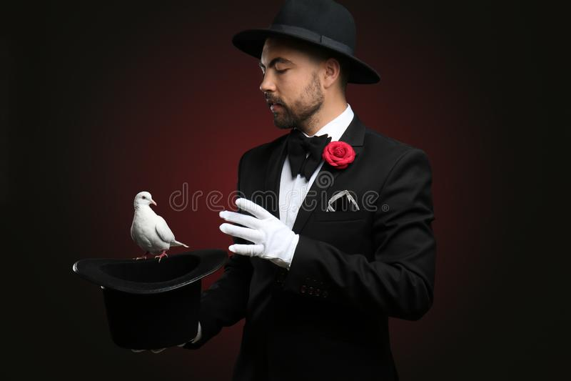 Male magician showing tricks with hat and white pigeon on dark background royalty free stock image