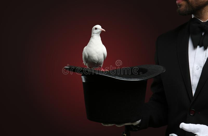 Male magician showing tricks with hat and white pigeon on dark background stock photo