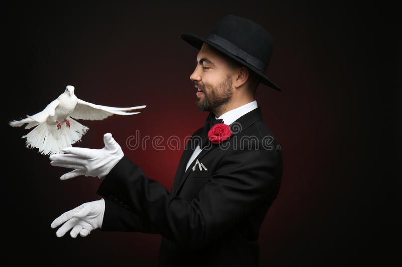 Male magician with white pigeon on dark background royalty free stock images