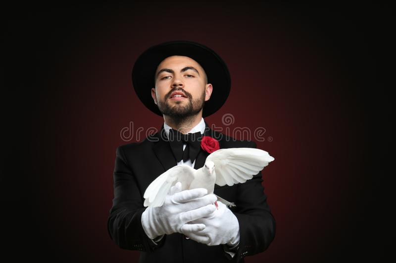 Male magician with white pigeon on dark background royalty free stock photography