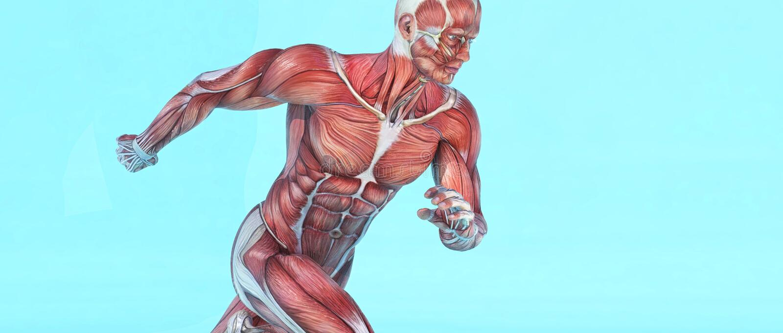Male muscular system running. This is a 3d render illustration vector illustration