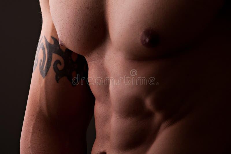 male muskulös torso royaltyfri bild