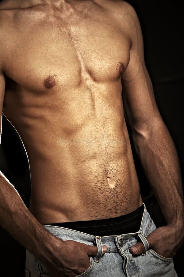 male muskulös torso royaltyfri foto