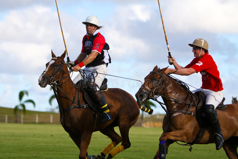 Male Polo Player royalty free stock images