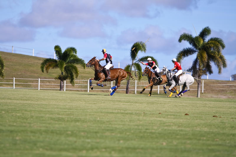 Male Polo Player. From the barbadian team at the Polo World championships in Barbados. Captain Leslie St. George Cheape from the England Polo Team racing with stock photography