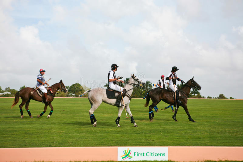 Male Polo Players royalty free stock photo