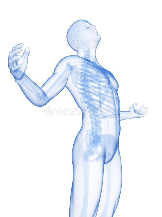 Male posing - visible skeleton. 3d rendered illustration of a male posing - visible skeleton vector illustration