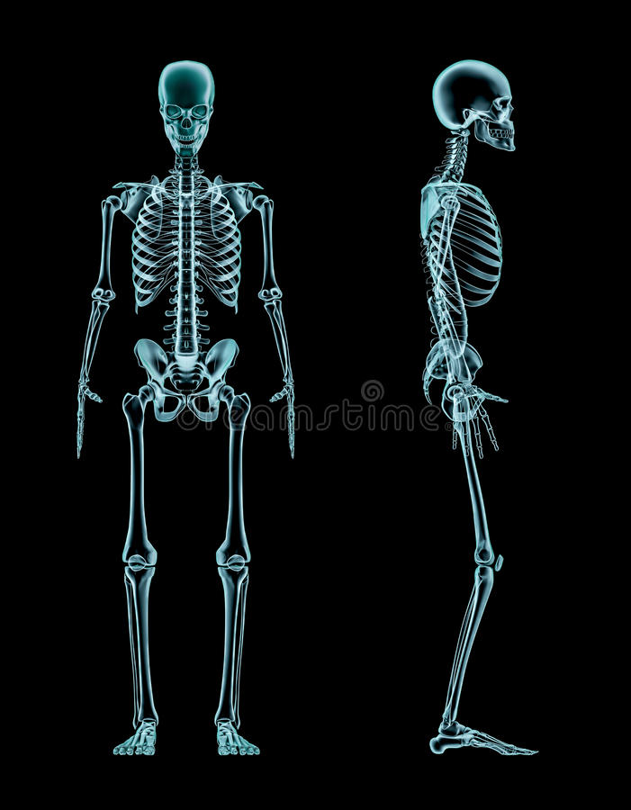 Male skeleton full body x-ray vector illustration