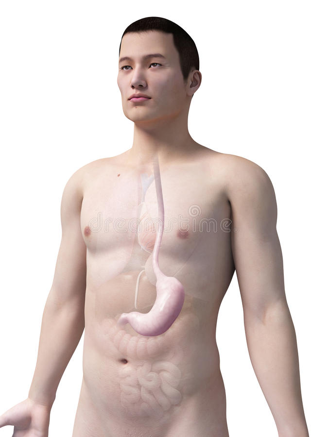 Free Male Stomach Royalty Free Stock Photo - 39788675
