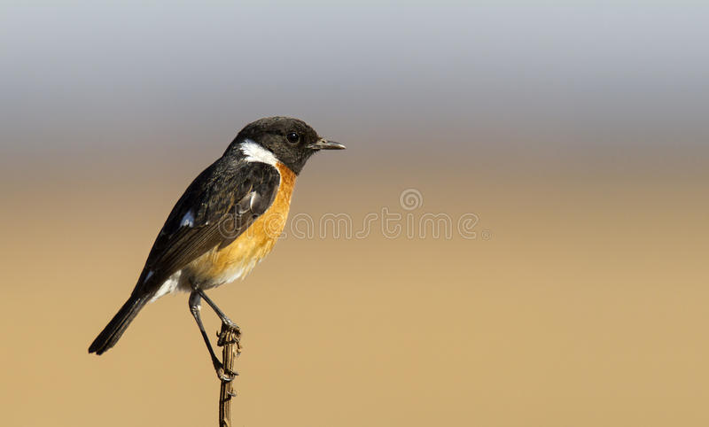 Download Male Stone Chat In Nice Light Royalty Free Stock Photos - Image: 26162228