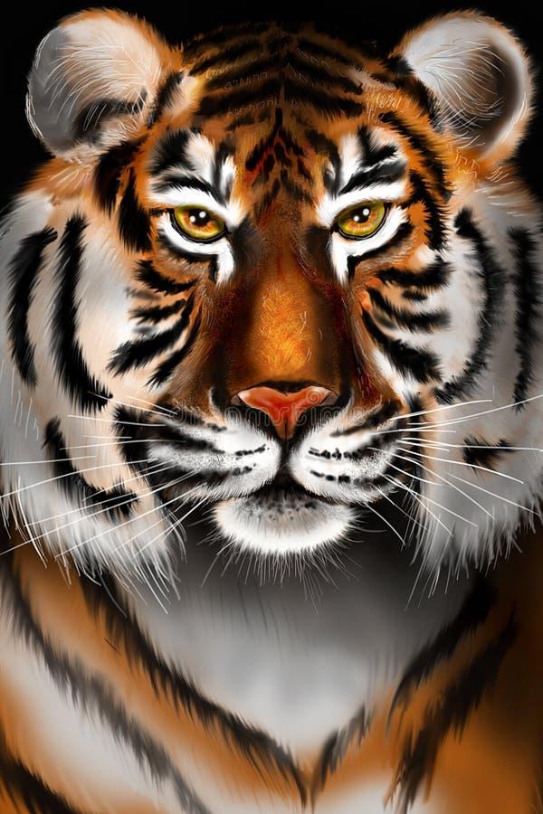male tiger för ståendeprofilstirrande dig royaltyfri foto