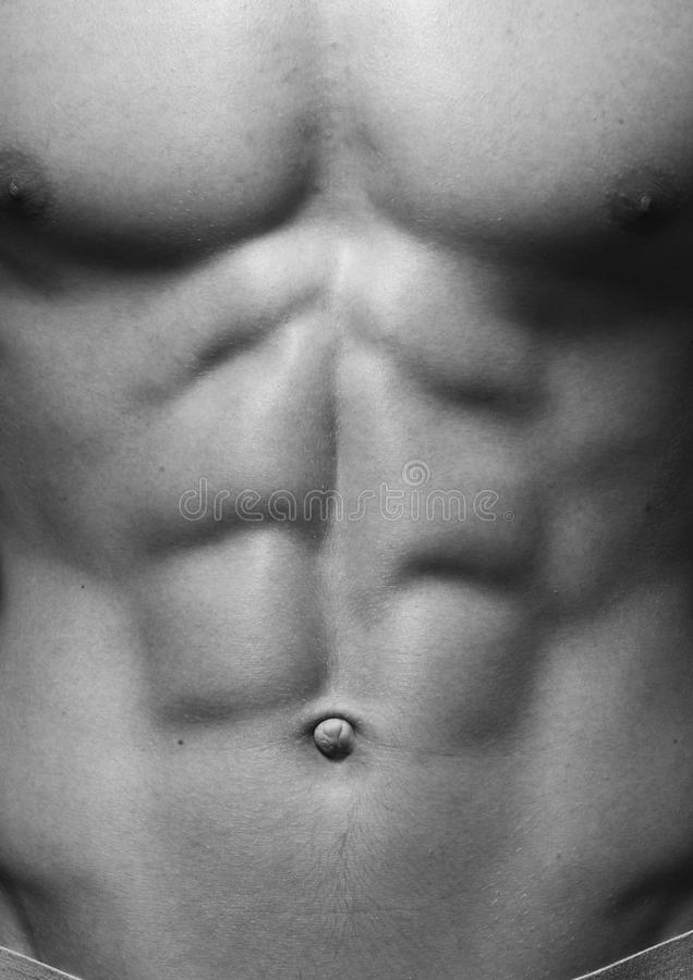 male torso royaltyfri foto