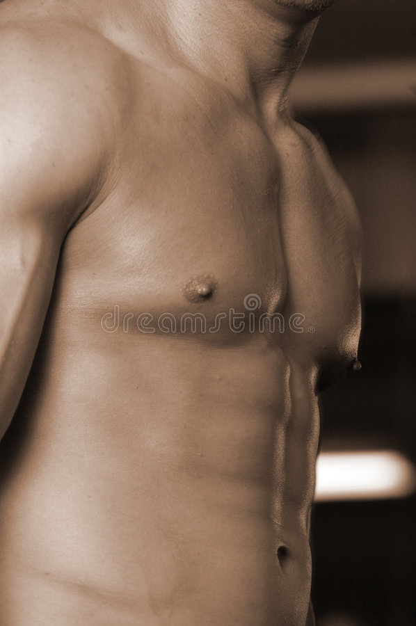 Download Male torso stock photo. Image of pump, athlete, iron, weight - 474706