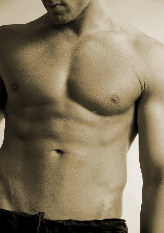Male torso stock image