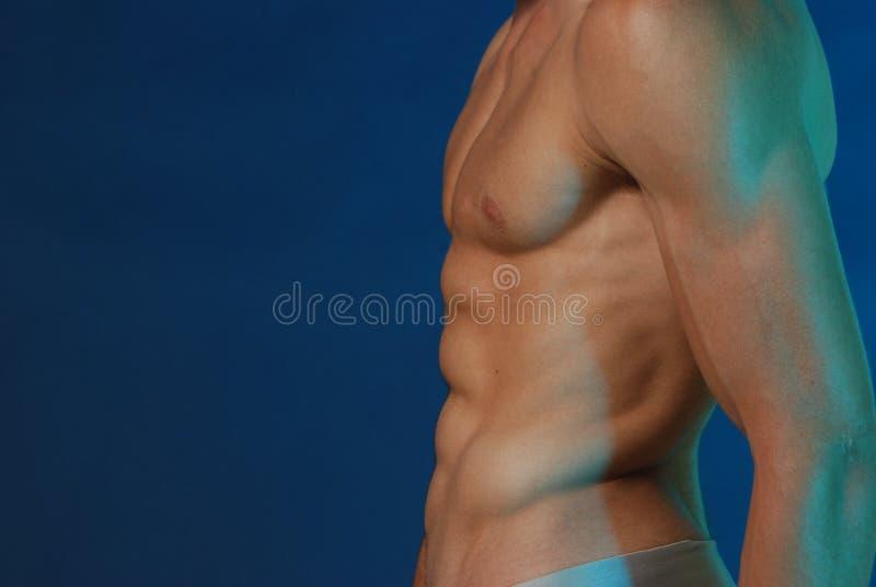 male torso fotografering för bildbyråer