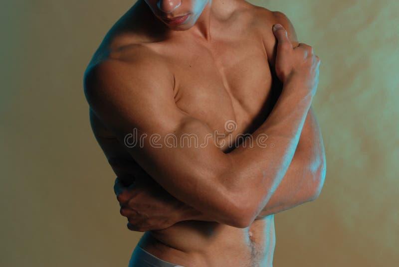 male torso royaltyfri bild