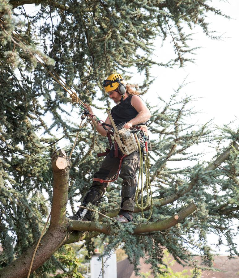 Male Tree Surgeon using a chainsaw royalty free stock photos