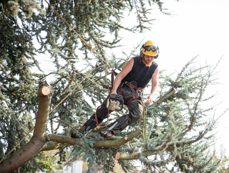 Male Tree Surgeon using a chainsaw royalty free stock images