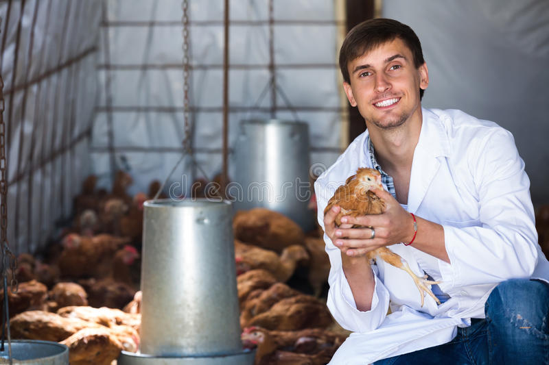 Male veterinarian in white coat holding brown. Happy male veterinarian in white coat holding brown chicken in hands on farm stock photos