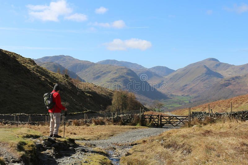 Male walker on mountain footpath in Lake District. Single male walker with rucksack and walking pole on the mountain path from Watendlath to Rosthwaite in the stock images