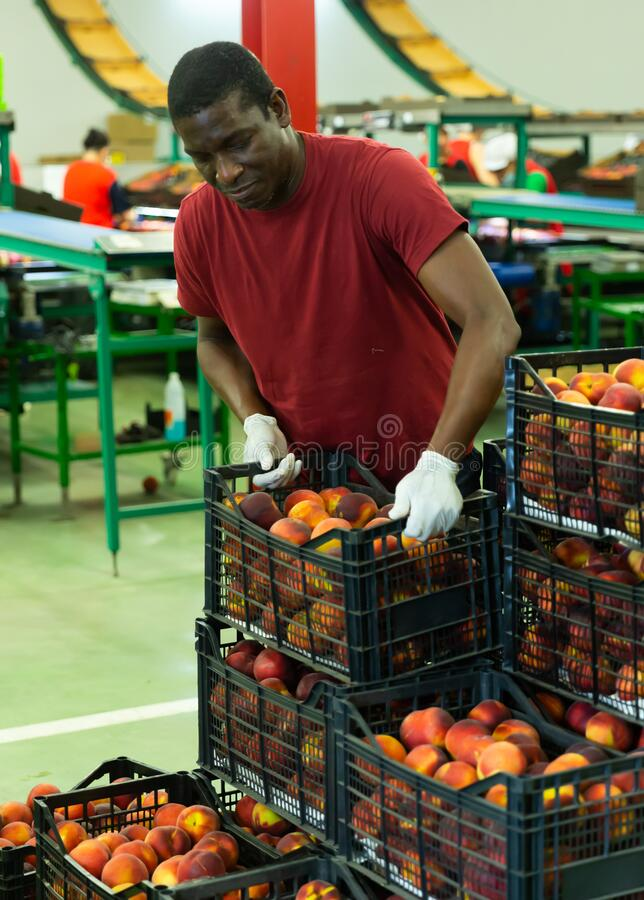 Free Male Warehouse Worker Loading Boxes With Peaches Stock Images - 193346144
