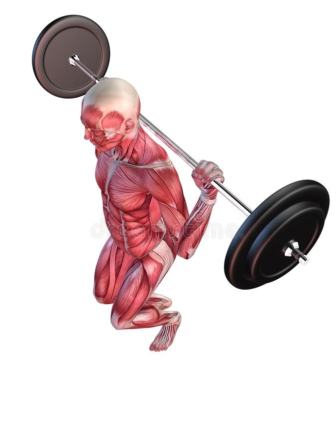 Download Male workout - squats stock illustration. Illustration of body - 15434701