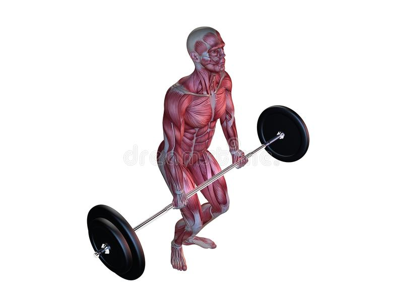 Male workout - squats royalty free illustration