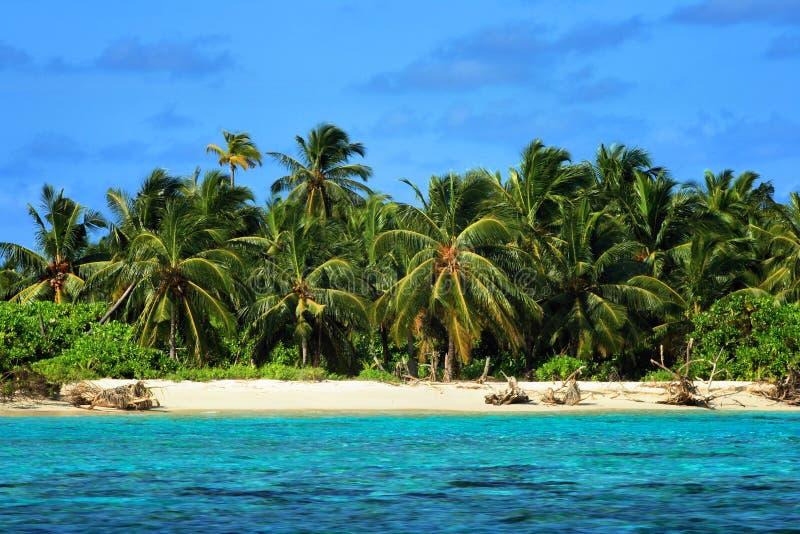 Malediven: Tropeninsel stockfotos