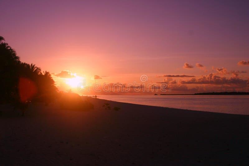 Maledives Island Palm Palme royalty free stock photos