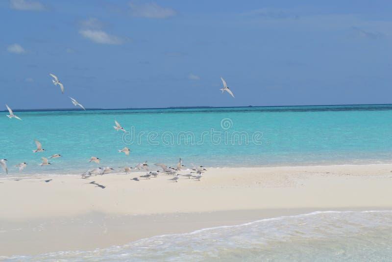 Maledives paradise beach stock photo