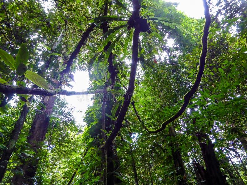 Maleisië - Dik en dicht regenwoud stock afbeeldingen