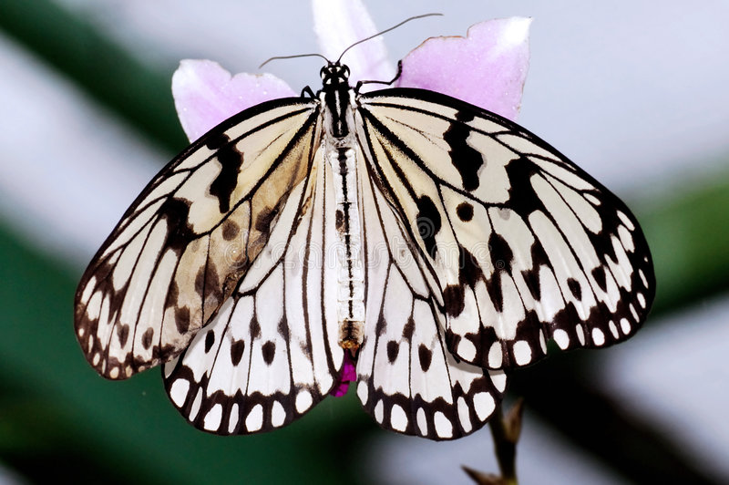 Maleisië, Penang: Vlinder royalty-vrije stock foto