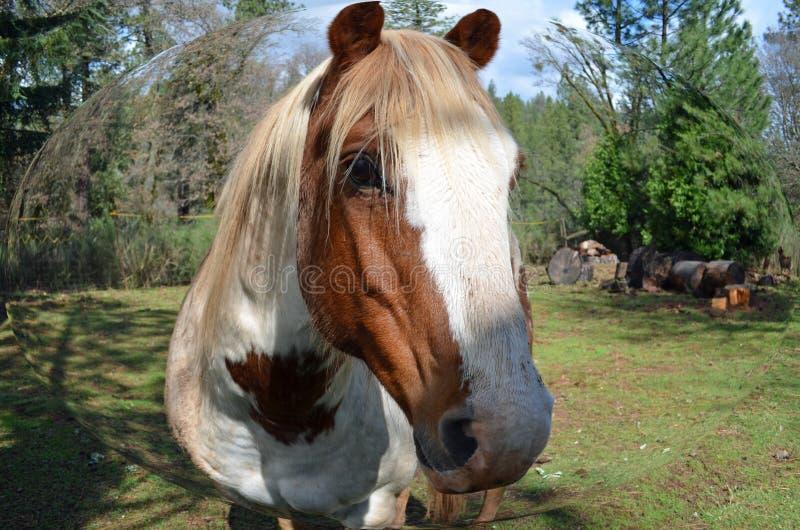 Malen Sie Pferd stockfotos