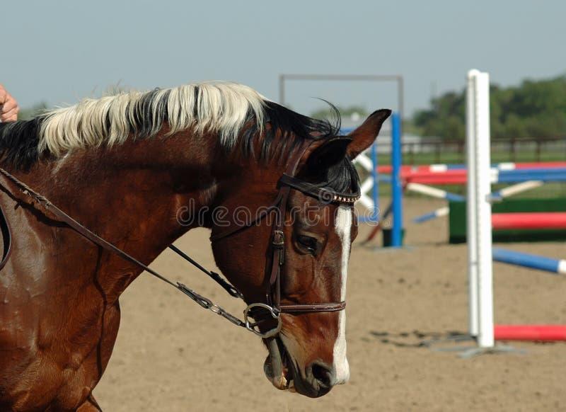Malen Sie Pferden-Überbrücker stockbilder