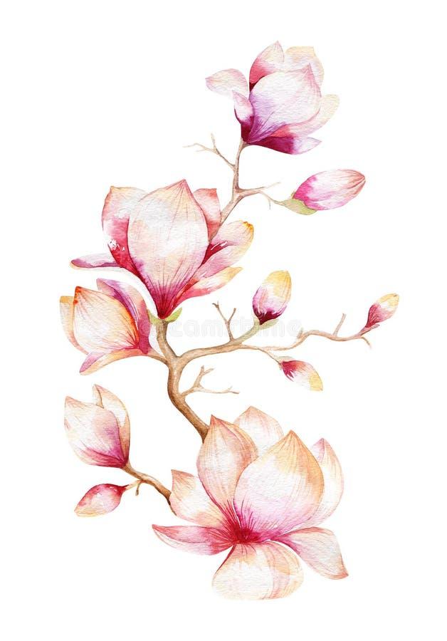 Malerei-Magnolienblumentapete Hand gezeichnetes Aquarell mit Blumen stock abbildung