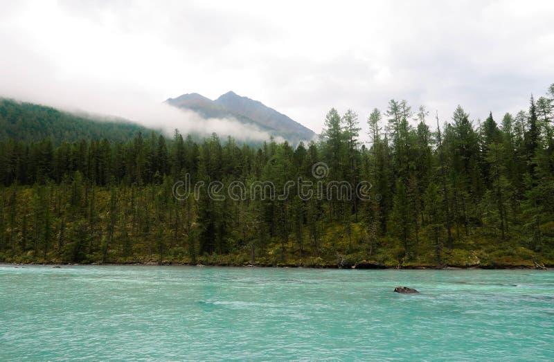 Malerische Ansicht an Kucherla-Gebirgsfluss und Gebirgs-WaldNationalpark Belukha, Altai-Republik, Sibirien, Russland stockbilder
