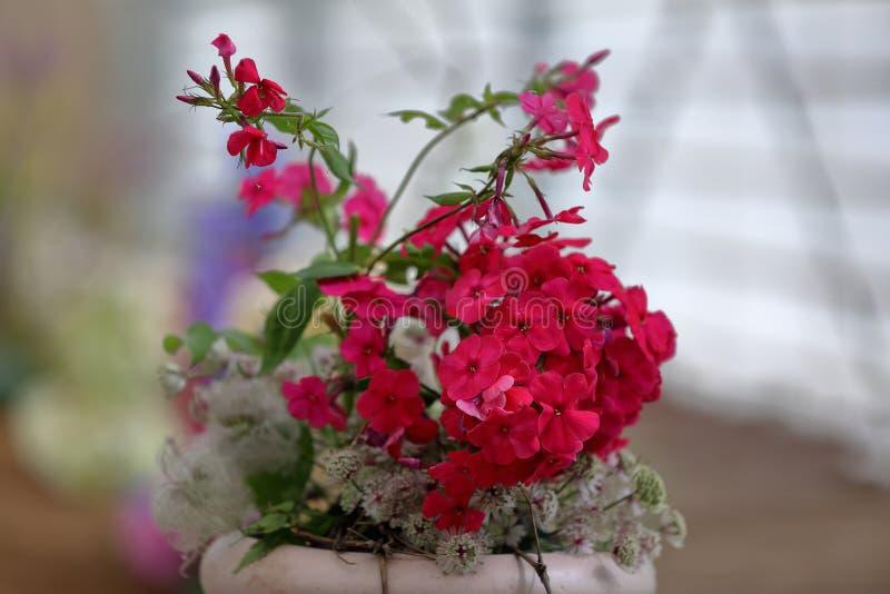 Malerische Blüte von hellen Flammenblumeblumen lizenzfreies stockfoto