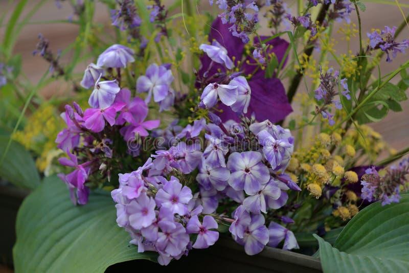 Malerische Blüte von hellen Flammenblumeblumen stockfotos