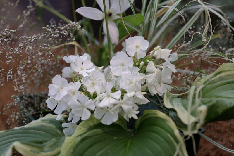 Malerische Blüte von hellen Flammenblumeblumen stockbilder