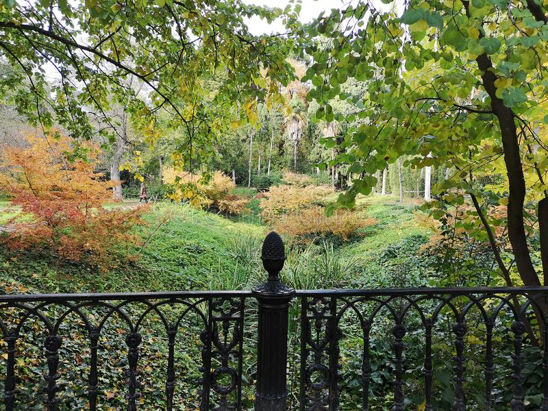 Malerische Landschaft des Herbstes Herbstbäume mit gelbem Laub in sonnigem Herbst November-Park beleuchteten durch Sonnenschein lizenzfreie stockbilder