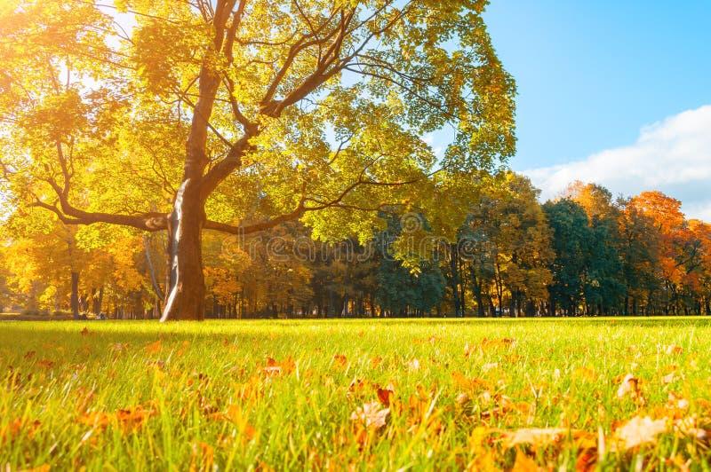 Malerische Landschaft des Herbstes im sonnigen Herbstlandschaftspark beleuchtete durch Sonnenlicht - Herbstpark im Sonnenschein stockfotografie