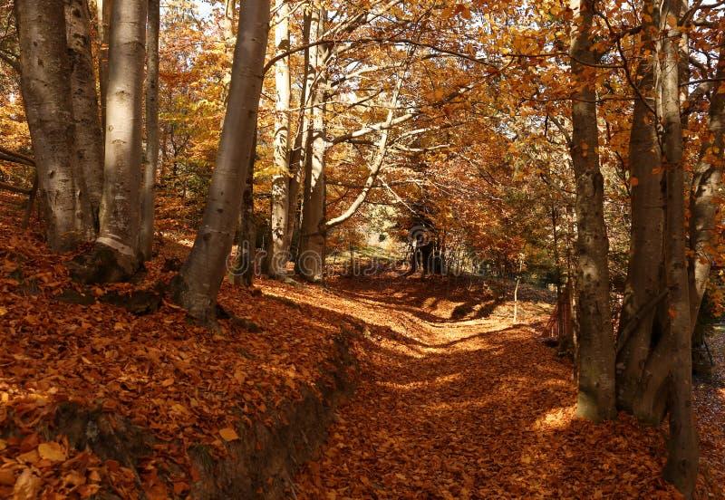 Malerische Landschaft mit Herbstwald stockfotos